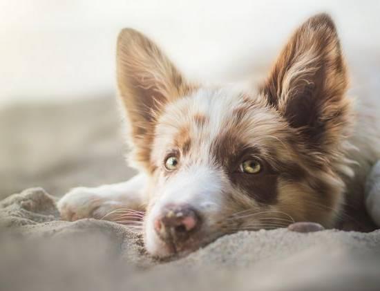 Энтероколит у собаки