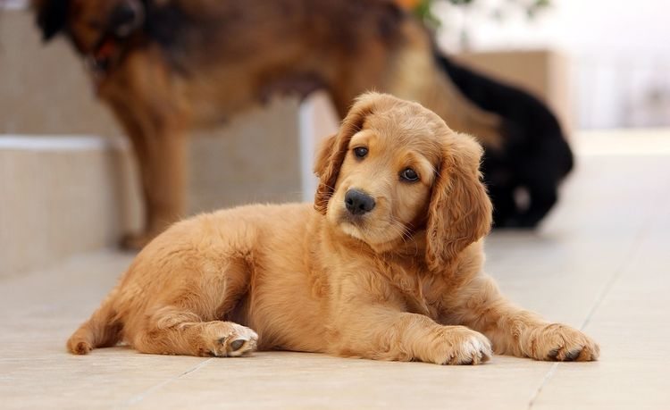 Как отучить собаку гадить и писать дома