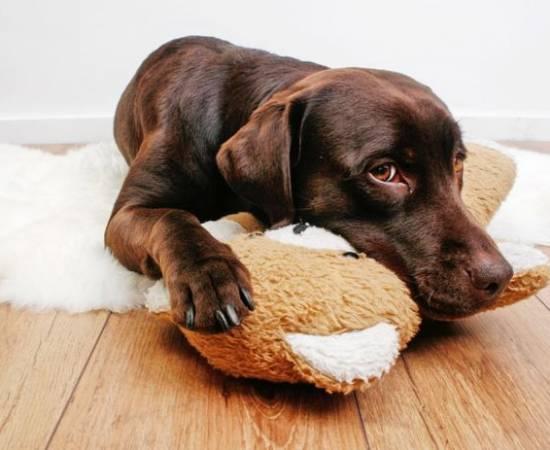 Лямблии у собак