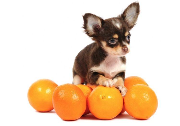 Можно ли собаке есть мандарины