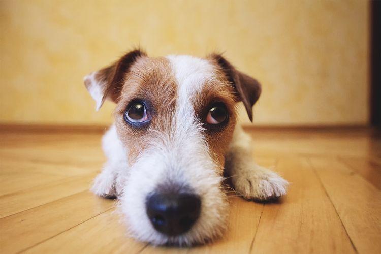 Непроходимость кишечника у собаки