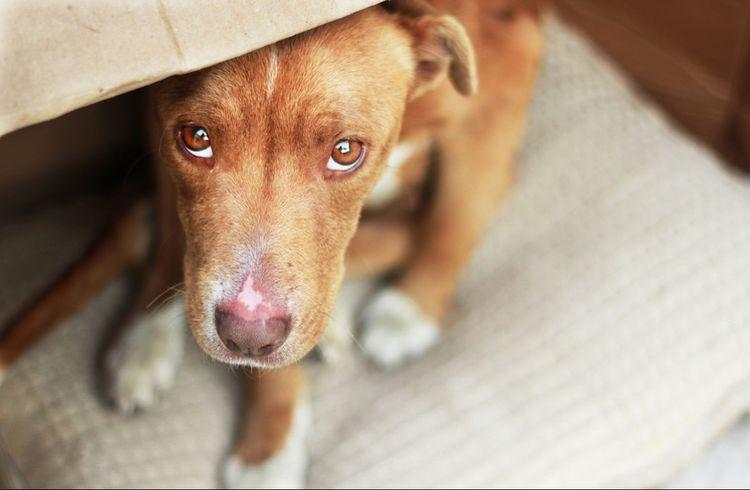 Пиодермия лечение антибиотиками у собак