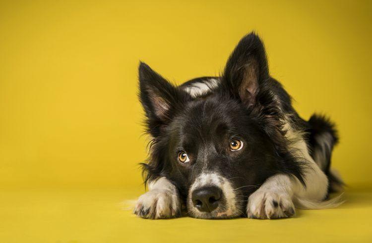 Воспаление легких у собак
