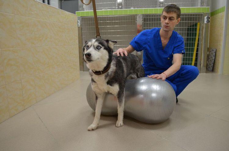 Гимнастика при дископатии у собак