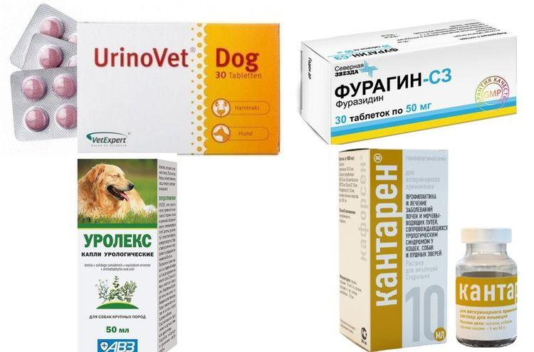 Препараты для лечения МКБ у собак