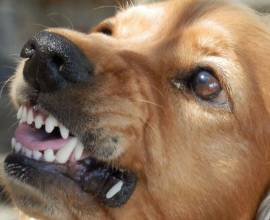 Отпугиватели собак