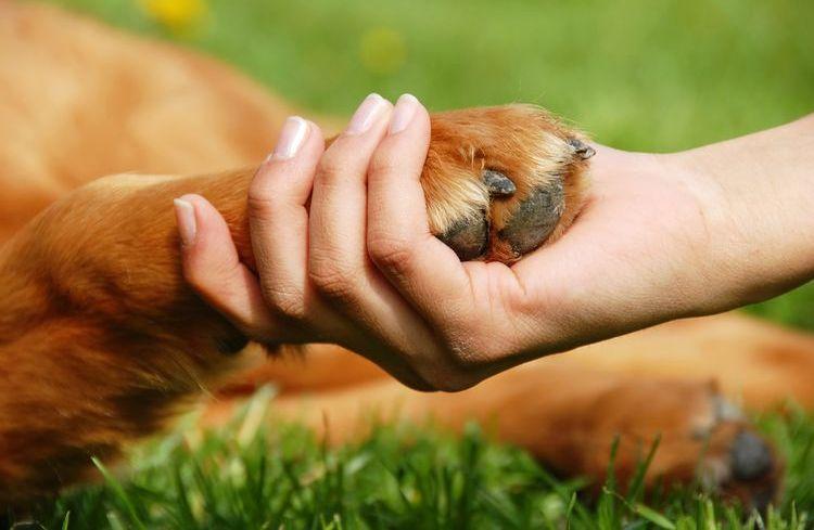 Пододерматит на лапе собаки