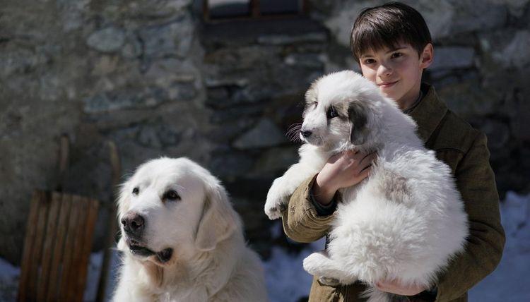 фильм про собаку Белль и Себастьян