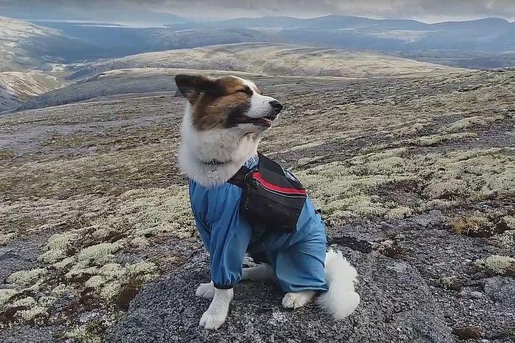 Собака-альпинист