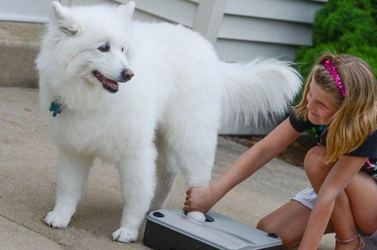 Лапомойка для собаки