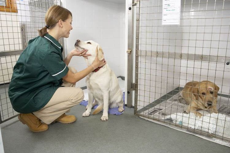 Собака на стационаре
