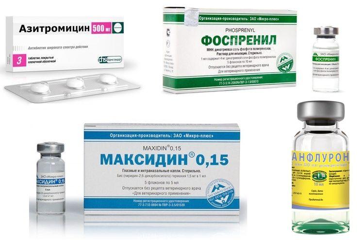 Препараты для лечения папилломатоза у собак