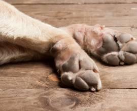 Воск для защиты лап собаки