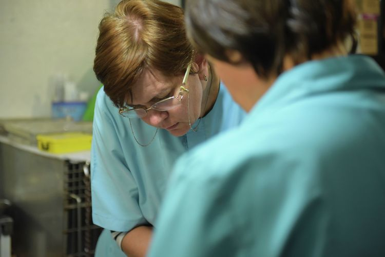 Ветеринары в клинике