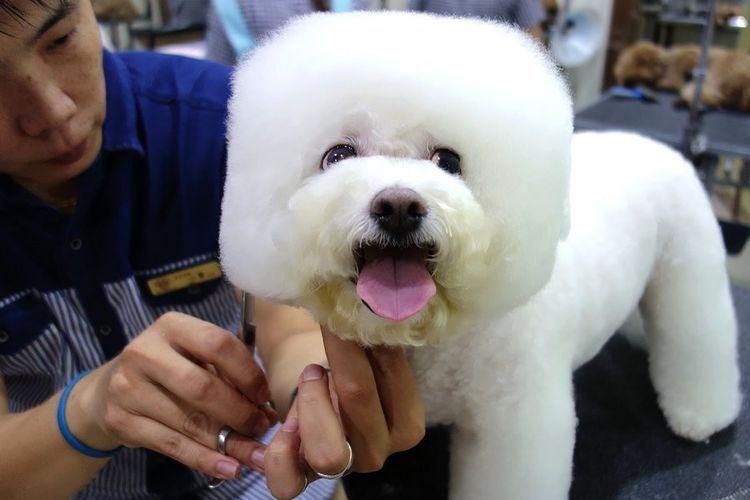 Квадратные стрижки собак