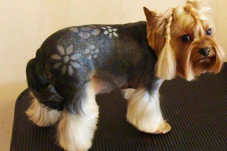 Необычные стрижки собак