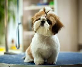 Собака на столе для груминга