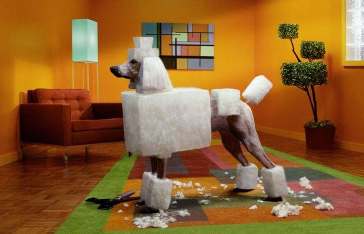Фото собаки с квадратной стрижкой