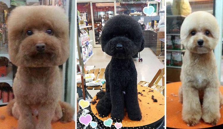 Собака с квадратной стрижкой