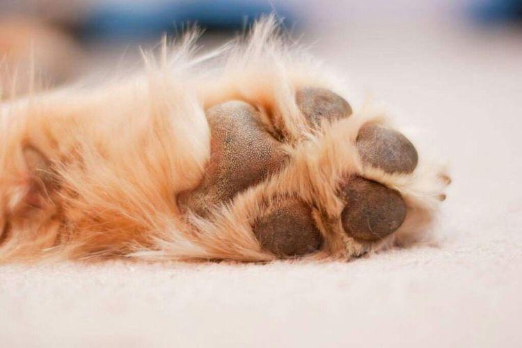 Подушечки лап собаки