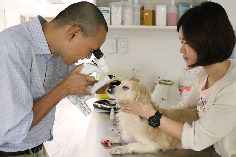 Офтальмолог осматривает глаза собаке