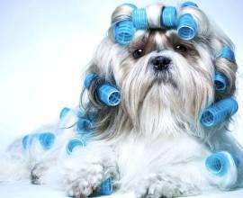 Схема стрижек собак по породам