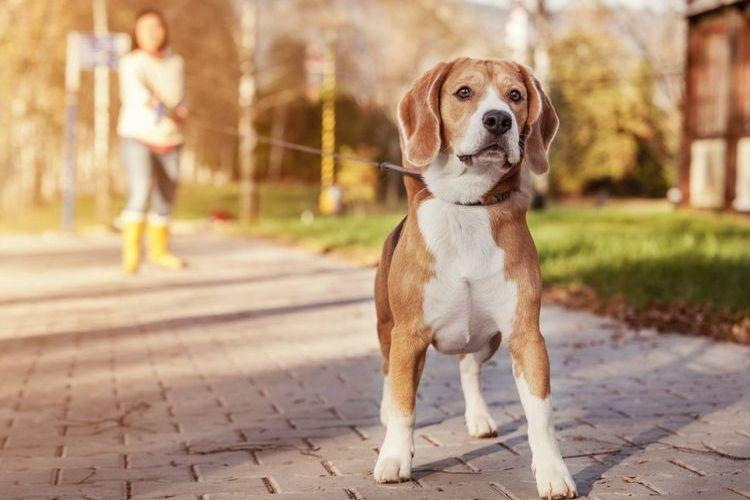 Выгул собак почасово