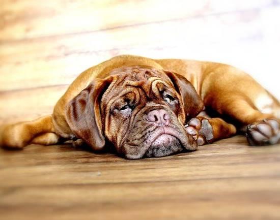Защемление нерва у собаки