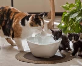 Автоматическая поилка для кошек