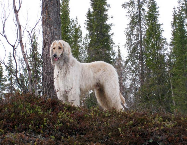 бакхмуль в лесу