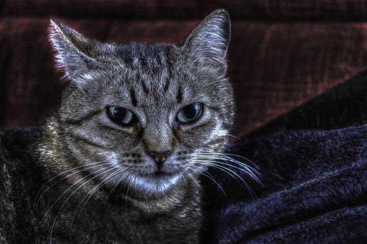 Болезни кошек: таблица симптомов
