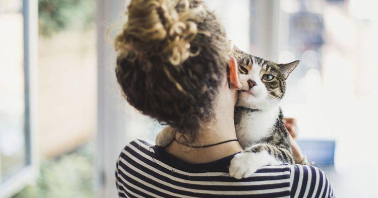 Дружба человека и кошки