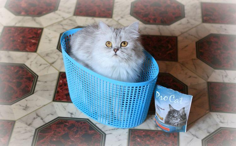 Лакомства для кошек Pro Cat