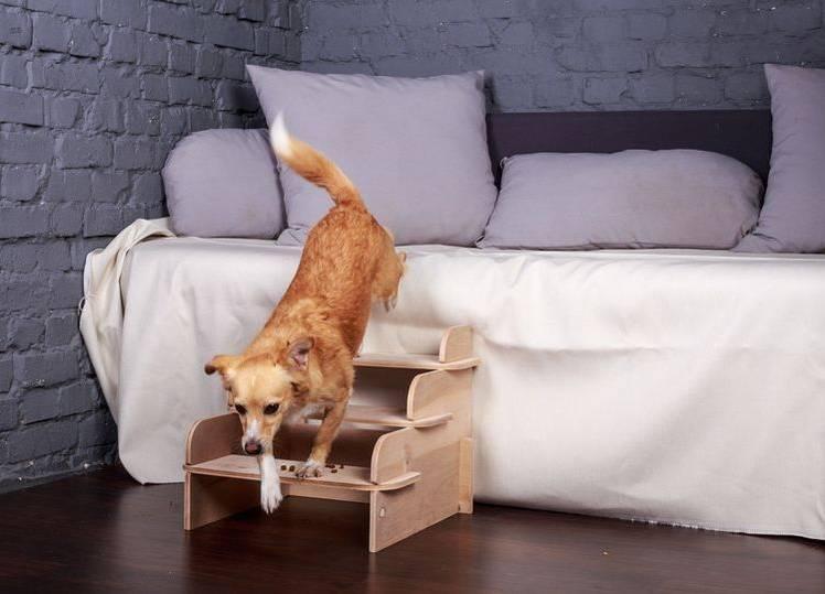 Приставная лесенка для собак