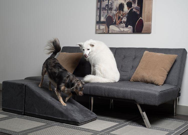 Виды лесенок для собак мелких пород