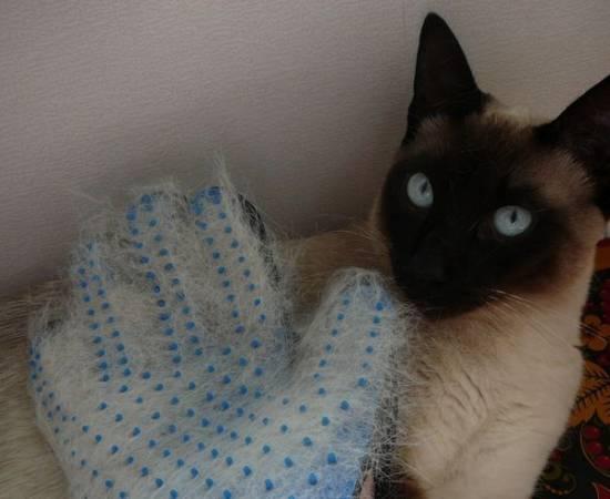 Перчатка для вычесывания кошки