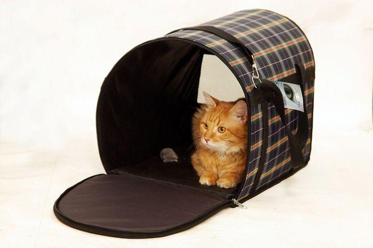 Кошка в мягкой сумке-переноске