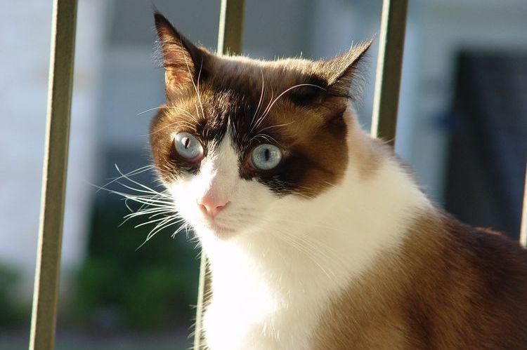 Кошка сидит у решетки