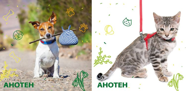 Анотен для собак и кошек