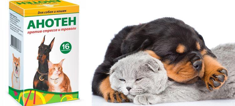 Препарат для кошек и собак Анотен