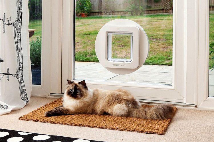 Дверца для кошек и котов