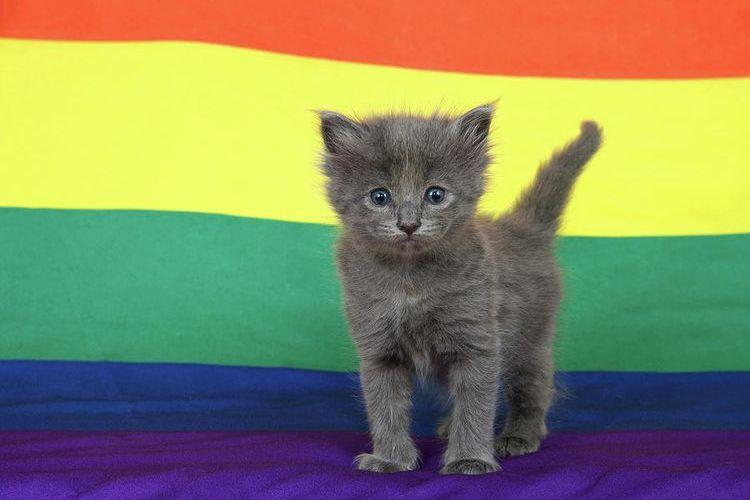 Серый котенок на фоне цветных полос