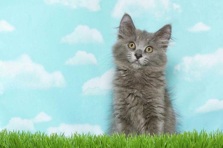 Серый котенок с зелеными глазами