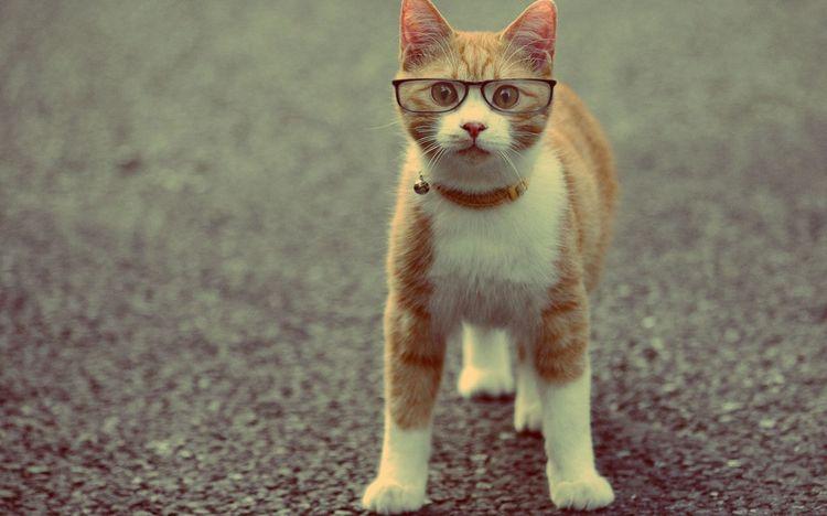 Кот в ошейнике и очках