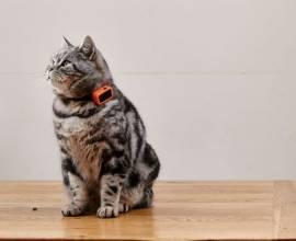 Ошейник с GPS для кошек