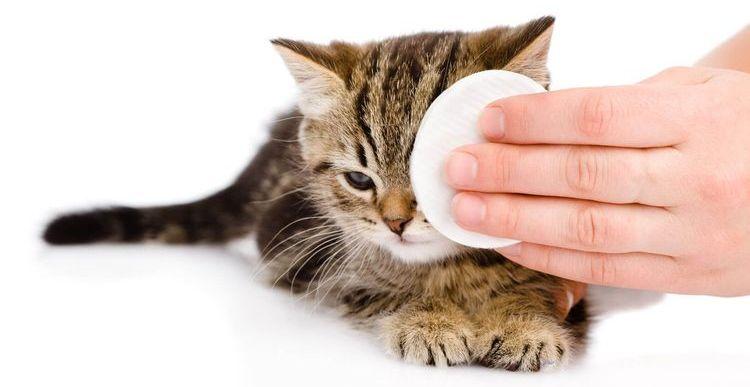 Гигиена глаз котенка