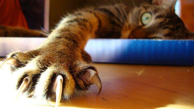 Кот с острыми когтями