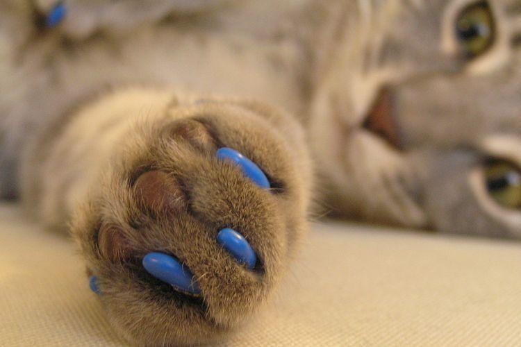 Силиконовые накладки на когти для котов