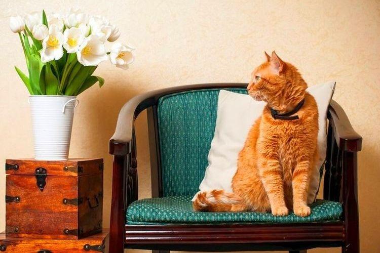 Рыжий кот сидит на кресле