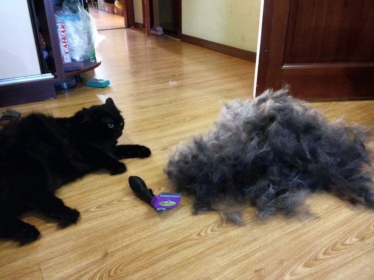 Использование фурминатора для длинношерстных котов
